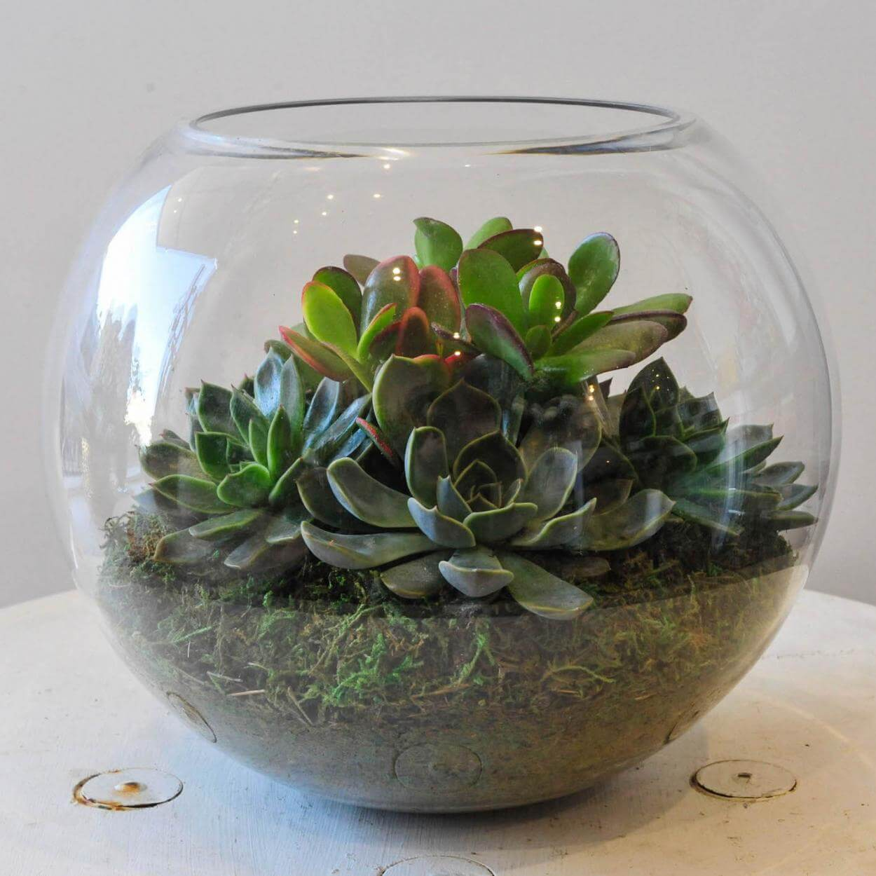 Large Fishbowl Terrarium The Flower Shed